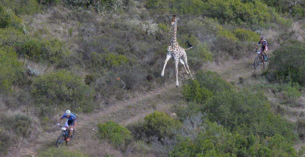 Luki + Giraffe 2