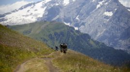TRANSALP 2020 // Eine wilde, wunderschöne Route + Im Gespräch Centurion/Vaude