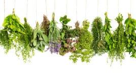 **Wildes Gemüse // 3 gesunde Lebensmittel von der Wiese