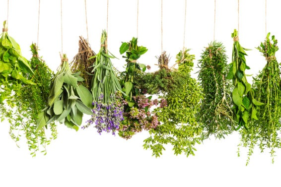 herbs hanging isolated on white. food ingredients