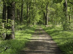 Beautiful path though an ancient woodland or forest outside Guildford, Surrey.  UK
