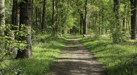 **Der verbotene Wald: Graubereich Forststraße